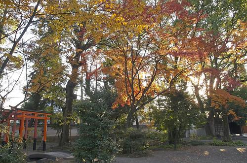 【写真】2013 紅葉 : 上御霊神社/2020-07-01/IMGP4180