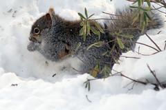 squirrel 078
