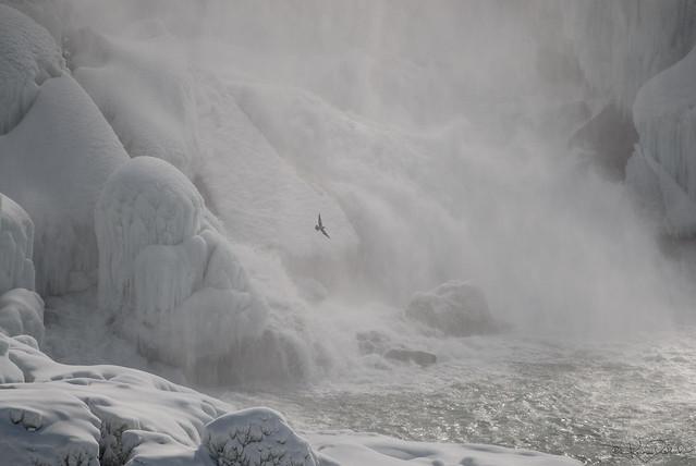 Frozen Niagara Mist (avec Seagull)