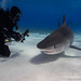 Amanda with a closeup on a Tiger Shark