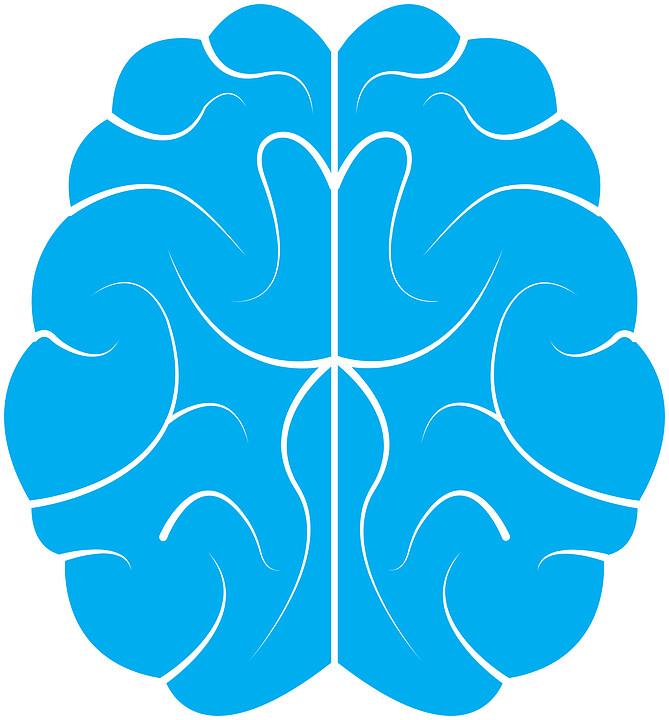 brain 58