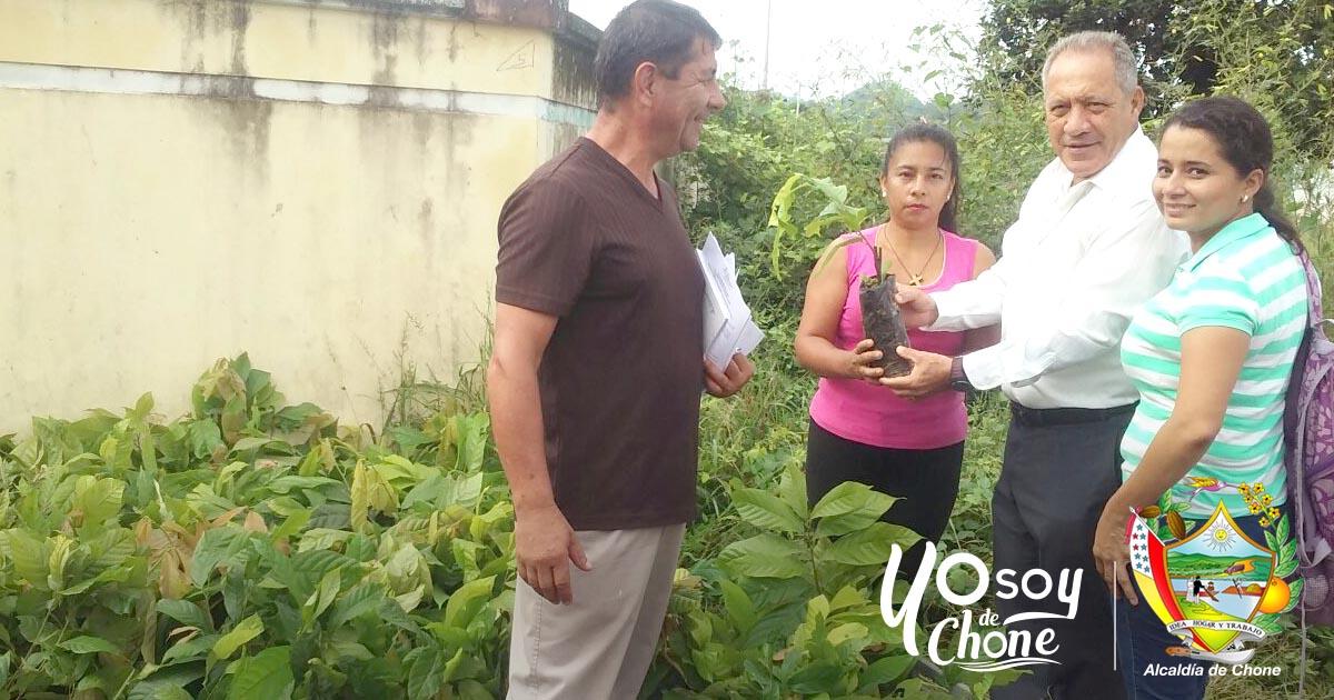 Entregan 11.662 plantas de cacao en comunidad Garrapatilla
