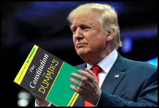 DumbF Constitution