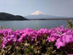 Mt Fuji in Spring