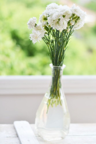 wite carnation