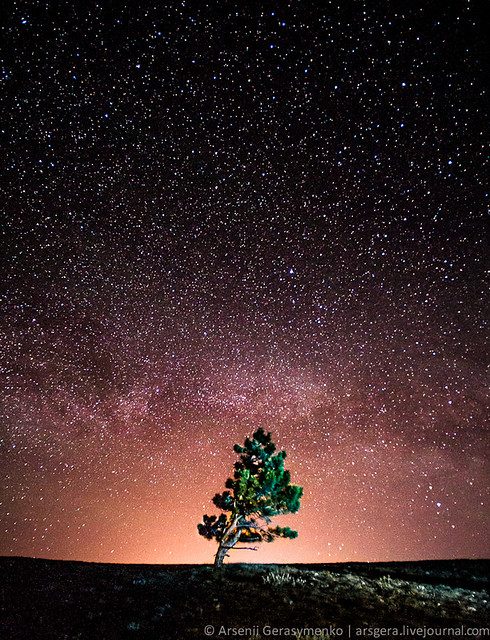 Milky Way, Tree and stars