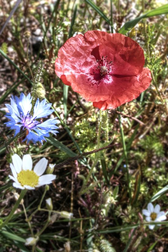 fioritura 13