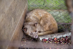 animal, possum, zoo, mammal, fauna, whiskers,