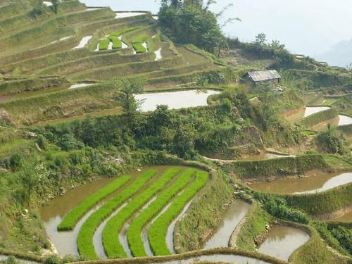 Yunnan13-Yuanyang 21 (5)