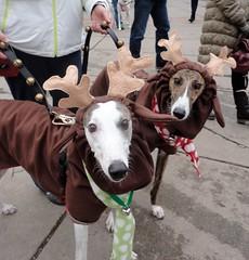 12-9-12 Jingle Bell Walk