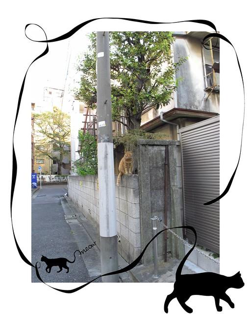 『catzElysium〜古アパートの猫3』の画像