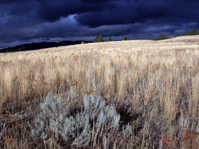 Dark clouds above the grasslands
