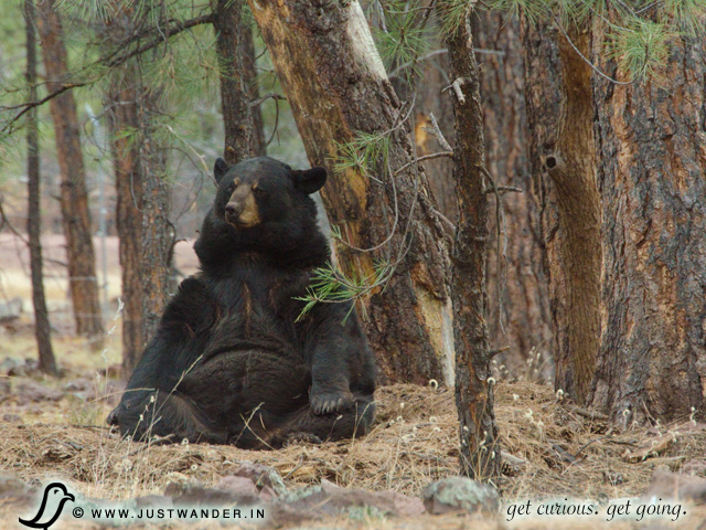 PIC: Bearizona's Black Bear