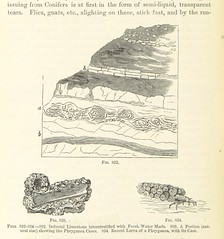 Image taken from page 514 of 'Elements of Geology: A text-book, etc'