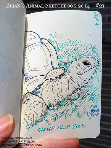 03-02-2014 #dailydrawing #animals turtle