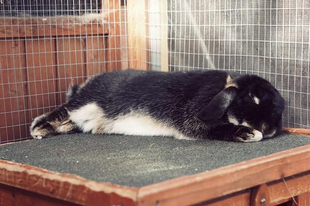 bunnies march 2014