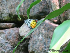 Insect & Butterfly Park, Zoo Negara