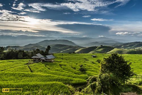 bird nikon nikonphotographer iamnikon travel thailand cnx chiangmai