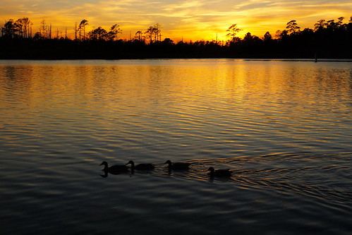 sunset cloudsstormssunsetssunrises spectacularsunsetsandsunrises creek northwestcreek northcarolina fairfieldharbour ducks mallardduck waterfront water sonyphotographing sonya58 sony