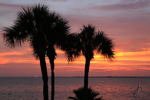 sunset sun set nature sea ocean water tree palm plant flora orange purple blue red reflection reflect relax moon dusk