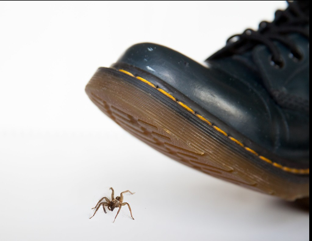 Squishing a spider