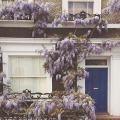Possibly my last wisteria shot. Possibly not.