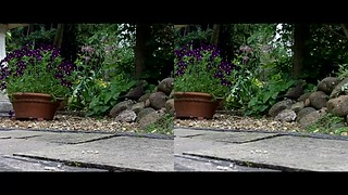 Blackbird on patio - 3d movie clip - crossview