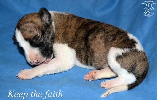 X Boy2 keep the faith 1 week old