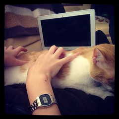 """Reinvención del concepto """"keyboard cat"""" por @droideca"""