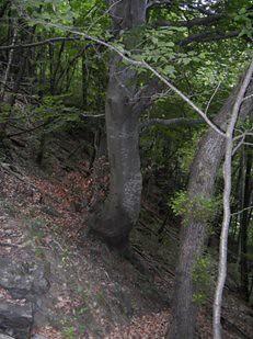 Il bosco degli elfi