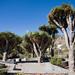 El Jardín Botánico Viera y Clavijo,( Jardín Canario) en Las Palmas de Gran Canaria