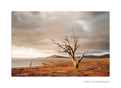 light tree sunrise snowymountains lakeeucumbene d700 bareearth olgabaldocke