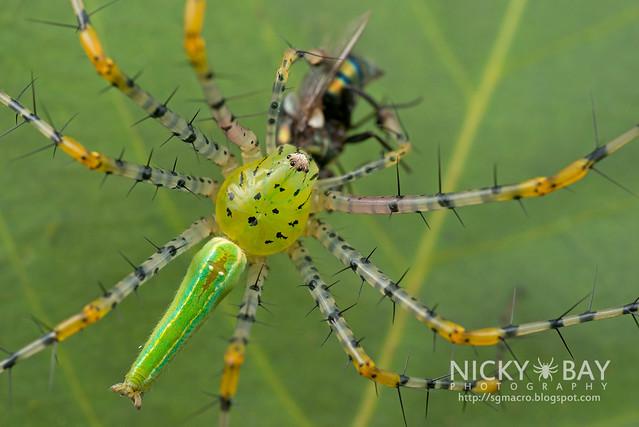 Green Lynx Spider (Peucetia sp.) - DSC_6249