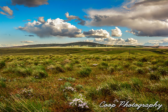 Spring In The Columbia Basin