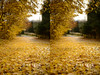 20131109_103248-foliage-3D