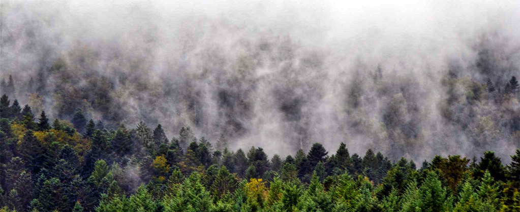 vosges mist