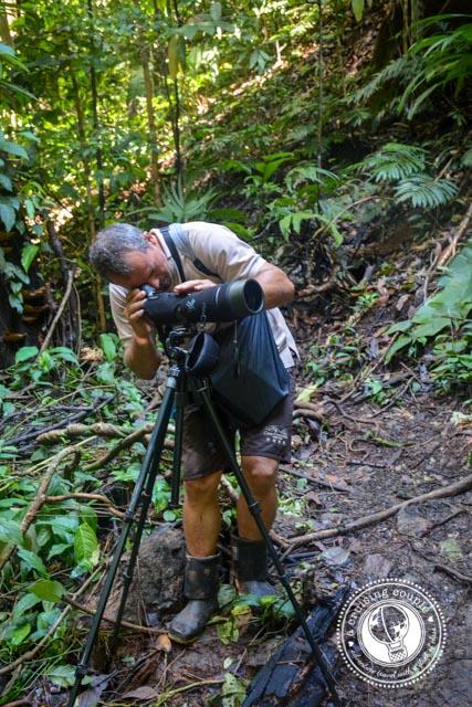 Corcovado National Park Guide