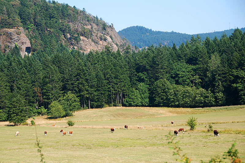Farmland in Genoa Bay, Cowichan Bay, Cowichan Valley, Vancouver Island, British Columbia, Canada