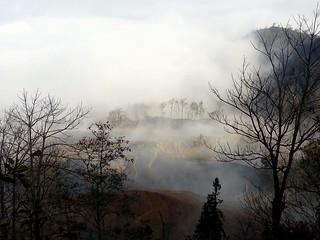 rather nice fog! 20140116_095901