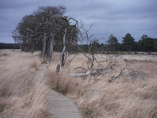 Boardwalk in Pudmore Pond Area, Thursley Common