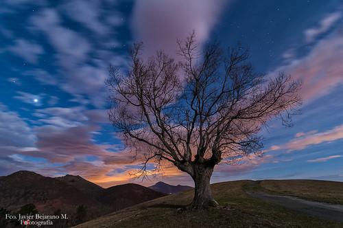 arbol baztan navarra nocturna paisaje telleria moonlihgt javier bejarano nikon nikonista d300 tokina tree landscape