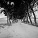 Fotografías realizadas con la minolta x300