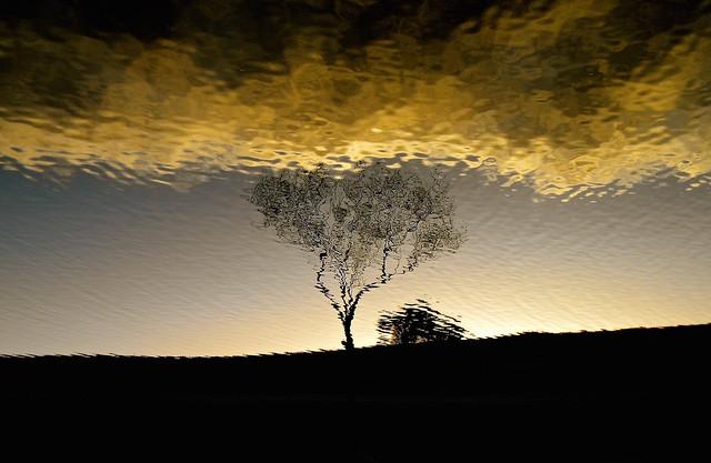 Lake tree - Henderson, Nikon COOLPIX L100