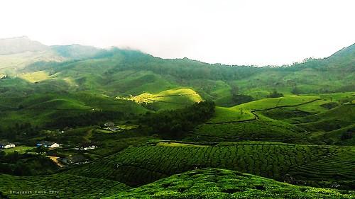 lush green tea plantation gardens forest sky landscape nature hills mountains shades shadows