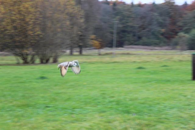 Eule im Wildpark Allensbach