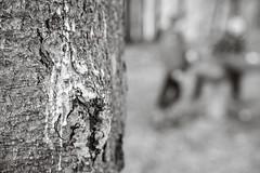 Tree Detail - intentional blur