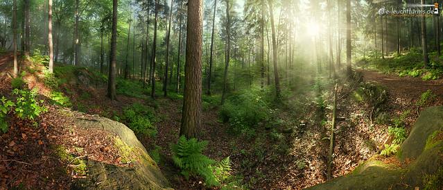 Sunshine through the wood