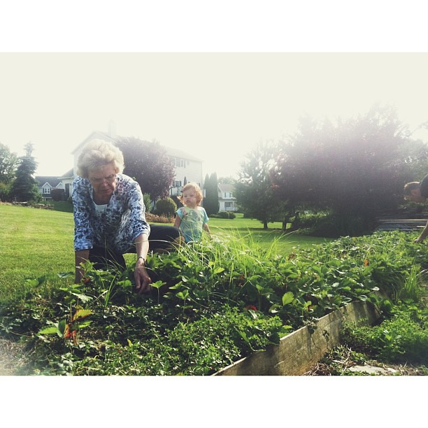 Picking strawberries with Grandma.