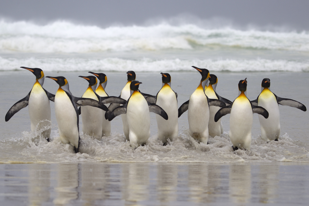 Penguins.