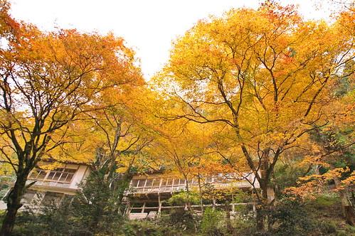 【写真】紅葉 : 志明院